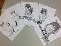 owl line drawings